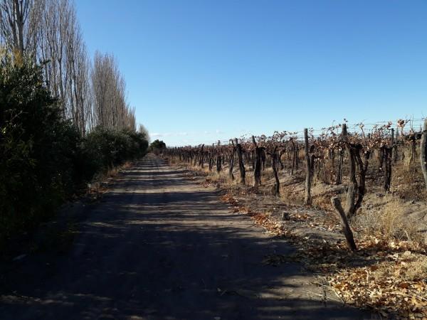 Venta finca en Cañada Seca